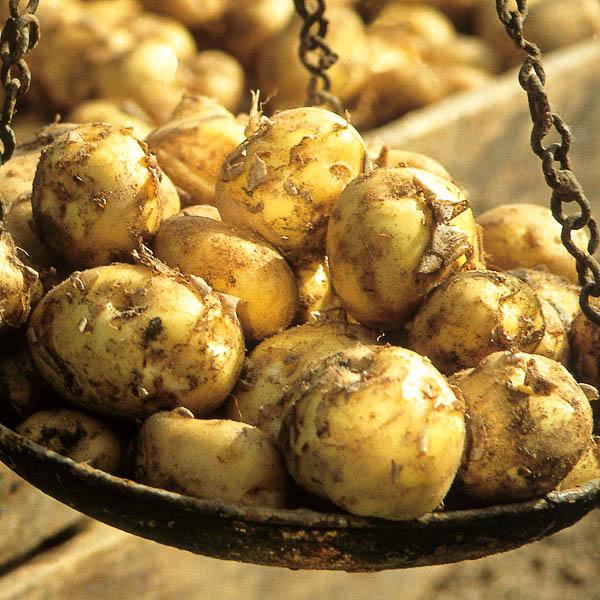 Vari t s grocep cdj - Cuisiner les pommes de terre de noirmoutier ...