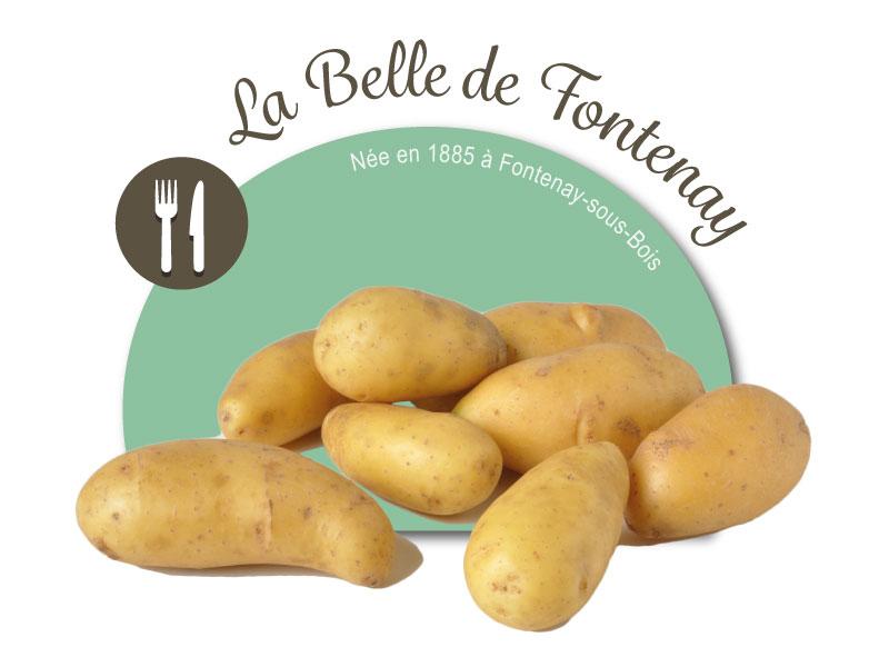emballage etui 25 plants de pommes de terre belle de fontenay ets perriol jeudy