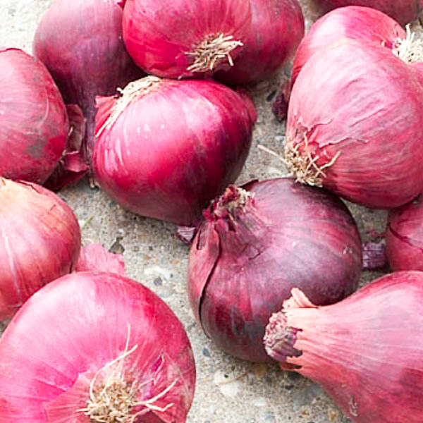 bulbe potager oignon rouge red baron mixte couleur