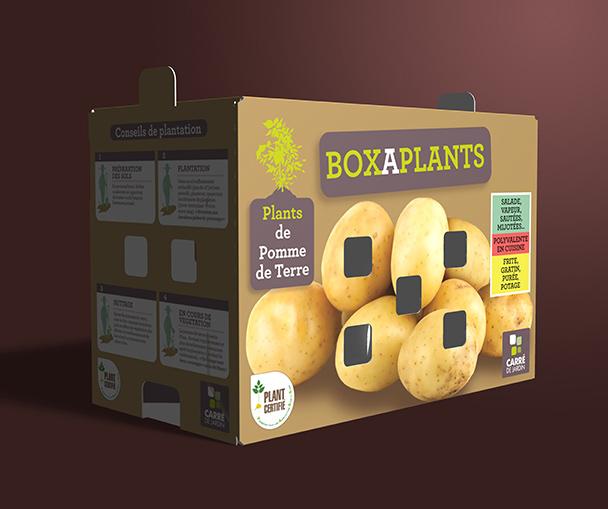 boxaplants ets perriol jeudy pomme de terre nouveauté carre de jardin