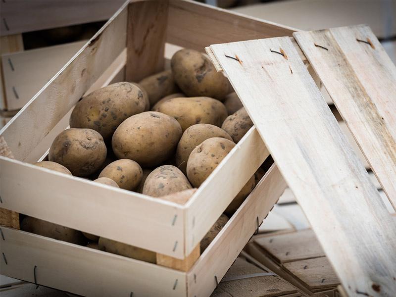 semence pomme de terre emaballage caisse 2.5kg nouveauté ets perriol