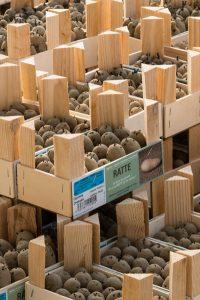 emballage decouverte ets perriol jeudy clayette fermée petite semence pomme de terre