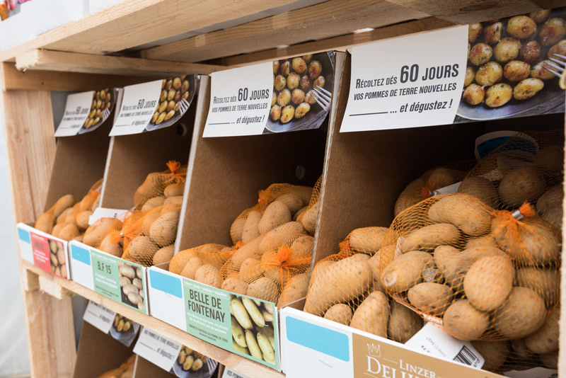 emballages_étui_semence_pomme-de-terre_primeur_etiquette