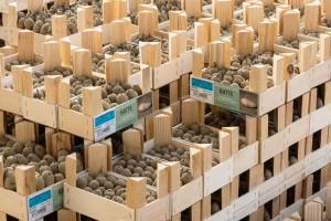emballages_clayette_dréssée_mini