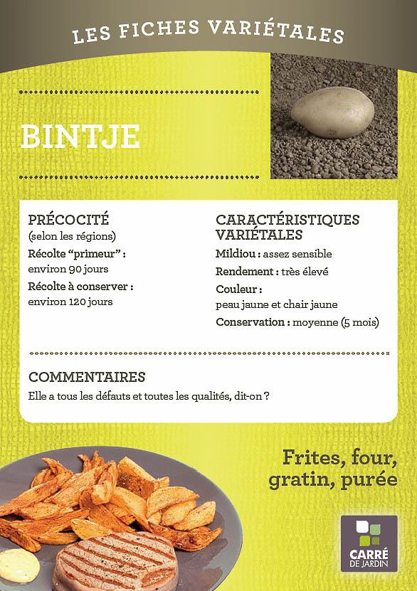 pommedeterre_carredejardin_fiche_variete_frite