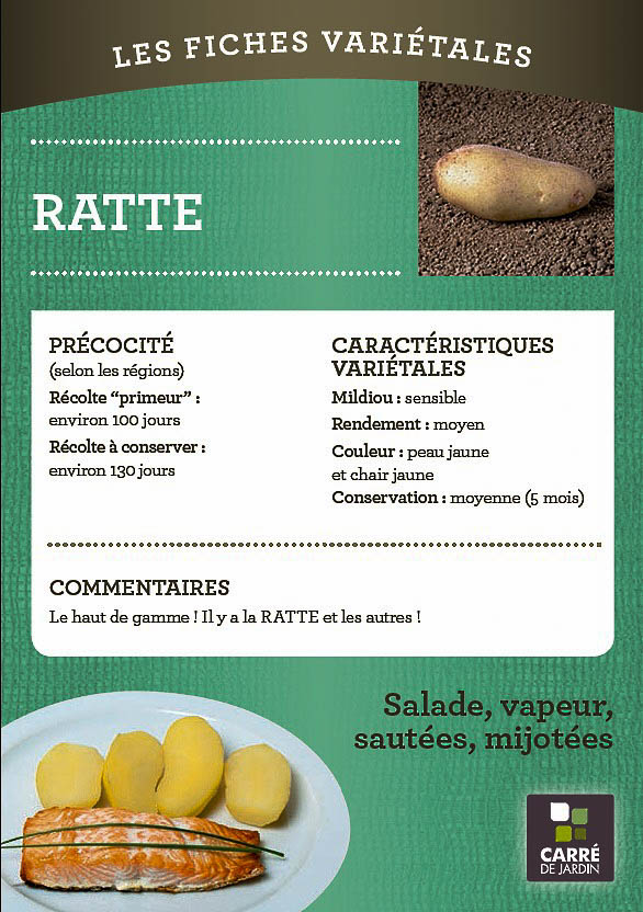 pommedeterre_carredejardin_fiche_variete_salade