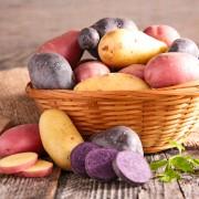 semences pomme de terre coloree