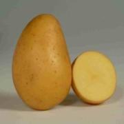 ets perriol jeudy semence de pomme de terre allians