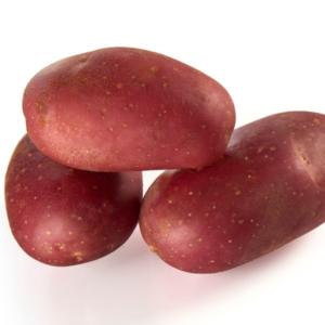 ets perriol jeudy semence de pomme de terre delila