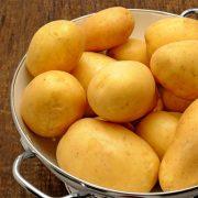 pomme de terre polyvaente en cuisine carre de jardin ets perriol marabel semence