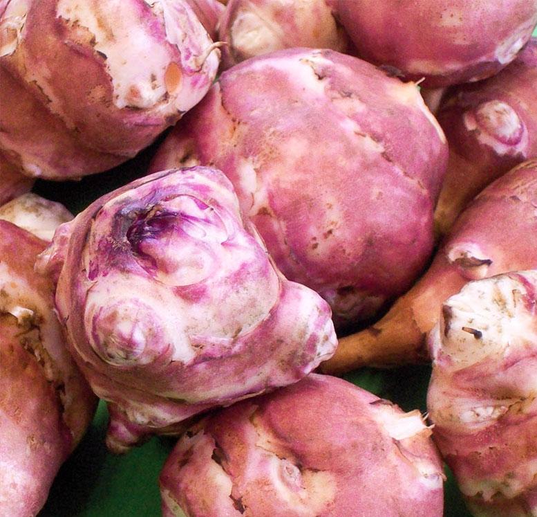 racine topinambour violet-de-rennes